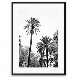 Affiche encadrée Grands Palmiers
