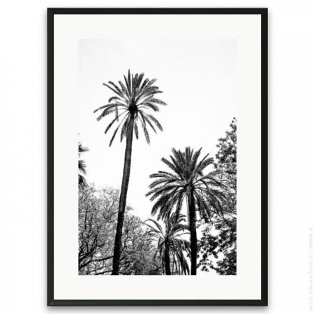 Black and white large palmtrees framed poster