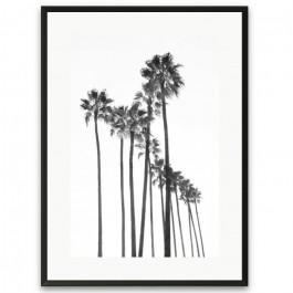 Black and white black palmtrees framed poster