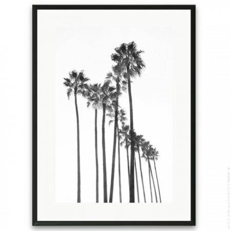 Affiche encadrée palmiers urbains