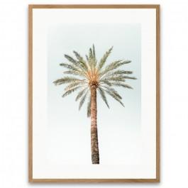 Affiche encadrée palmier solitaire