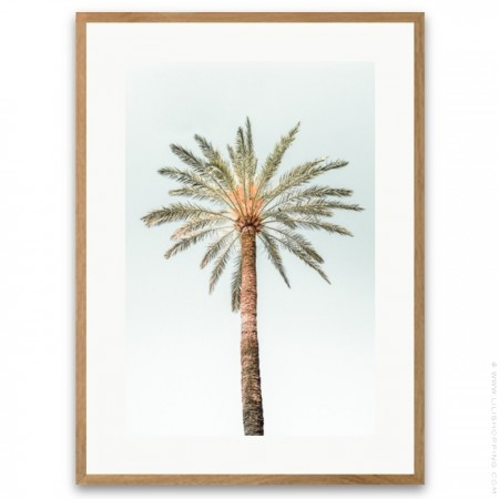 Lonely palmtree framed poster