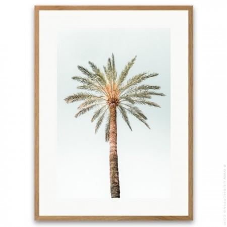 3 vintage palmtrees framed poster
